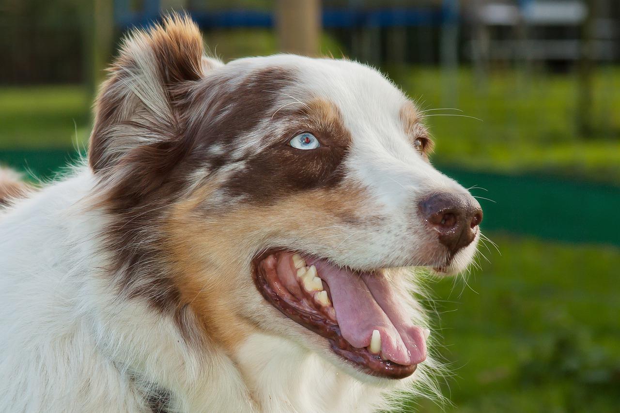 Tänk långsiktigt hundägande