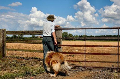 Vallhundar, deras arbete och deras träning