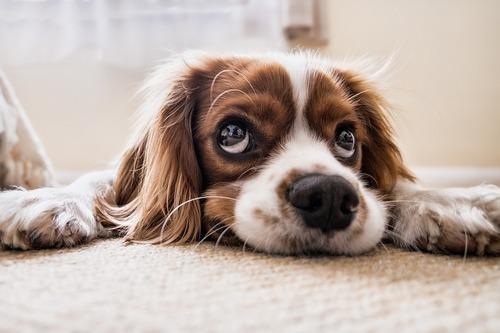 Så väljer du rätt hundförsäkring